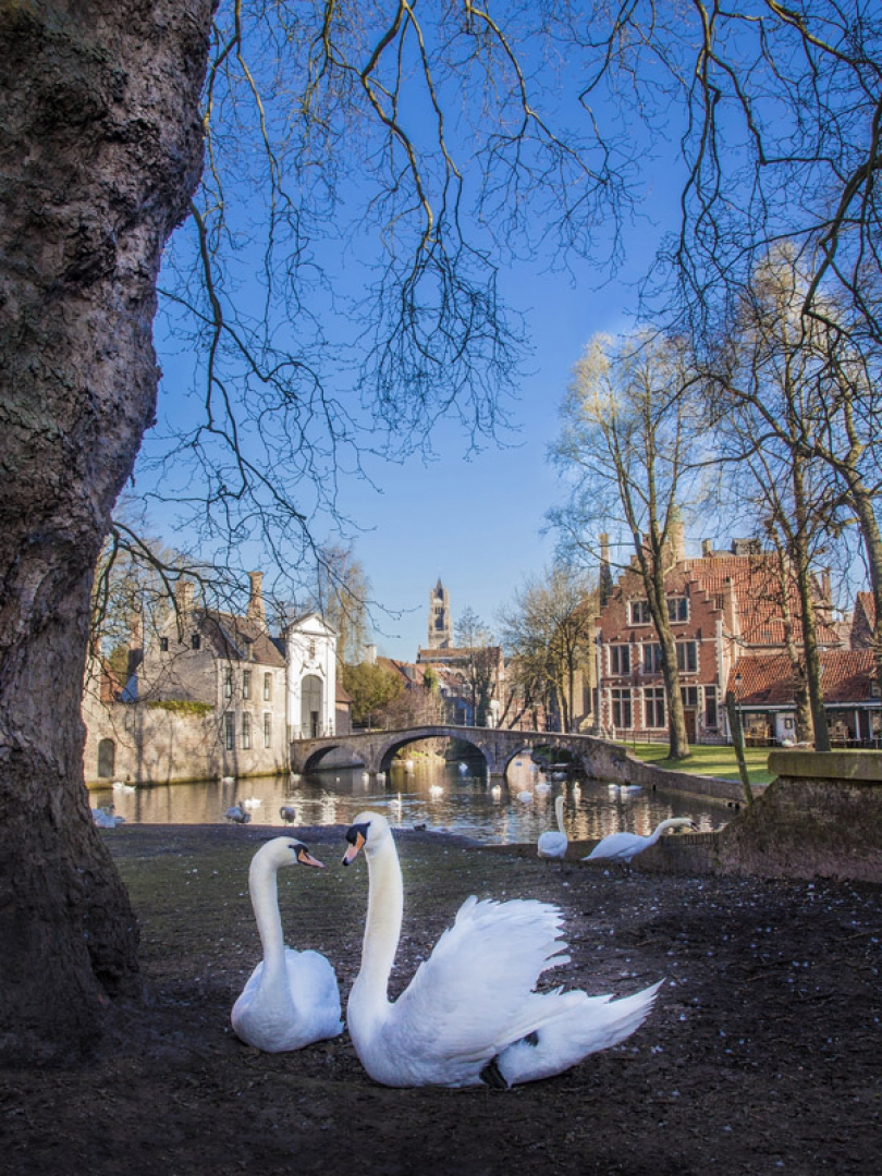 The city offers a lot of inspiration for your Bruges city break: it has a rich cultural heritage, world famous museums and exceptional places to visit.